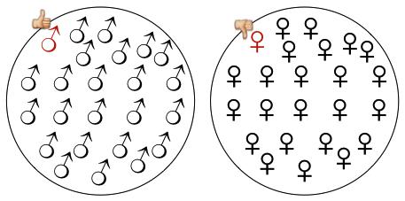 gender_v2